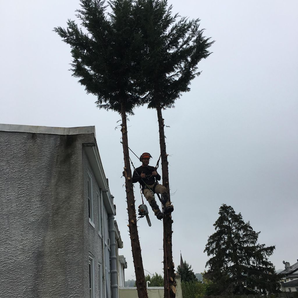 Sean's Tree Service