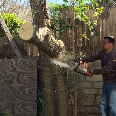 Avatar for Lupe's Tree Service Austin, TX Thumbtack