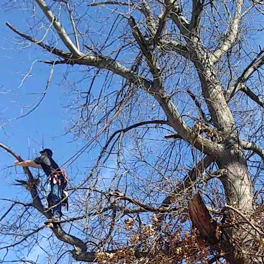 Erics Tree Service