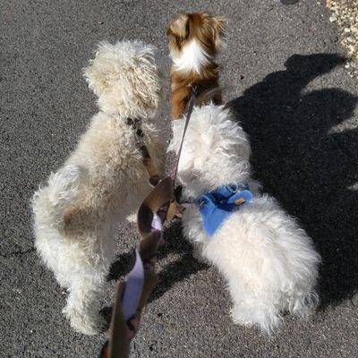 Avatar for Heather's hounds Prescott Valley, AZ Thumbtack