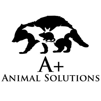 Avatar for A Plus Animal Solutions