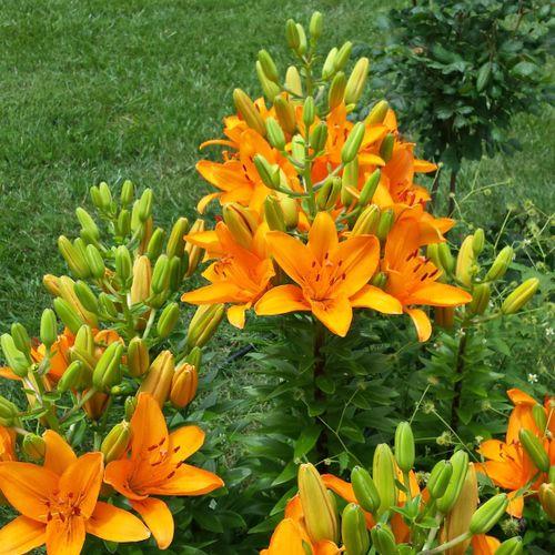 Client's gorgeous flowers!