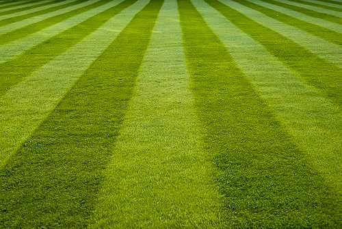 Auspicious Lawn and Landscape