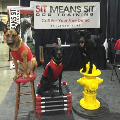 Avatar for Sit Means Sit Pittsburgh North Cranberry Township, PA Thumbtack