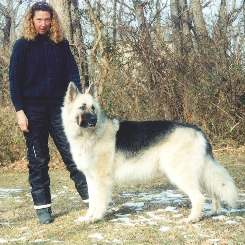 Shadow Hill Dog Training