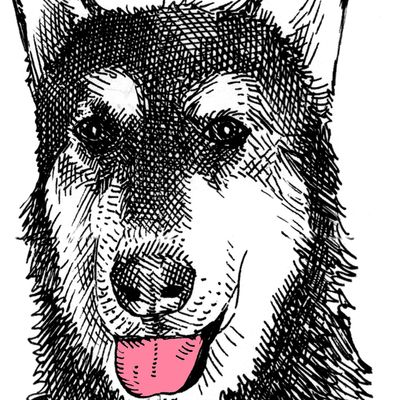 Avatar for Jagger's Doggie Daycare, Boarding, Grooming, & ...
