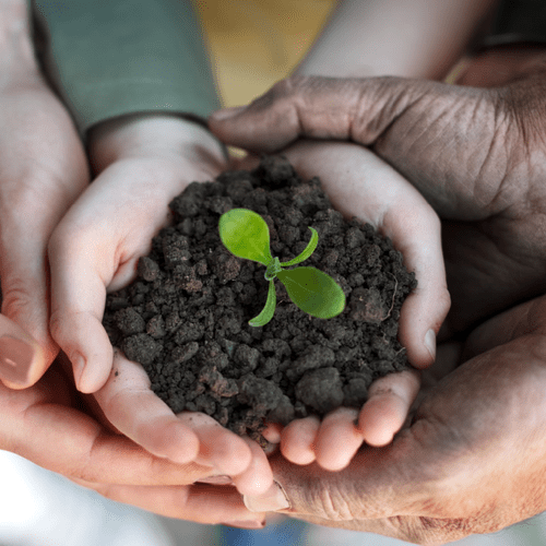 Growing a company is like growing a plant.  I see my role in helping you make the best decisions that you can grow as a business successfully.