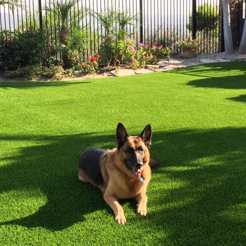 Our synthetic grass is pet friendly.  Artificial turf installed in Yorba Linda, CA