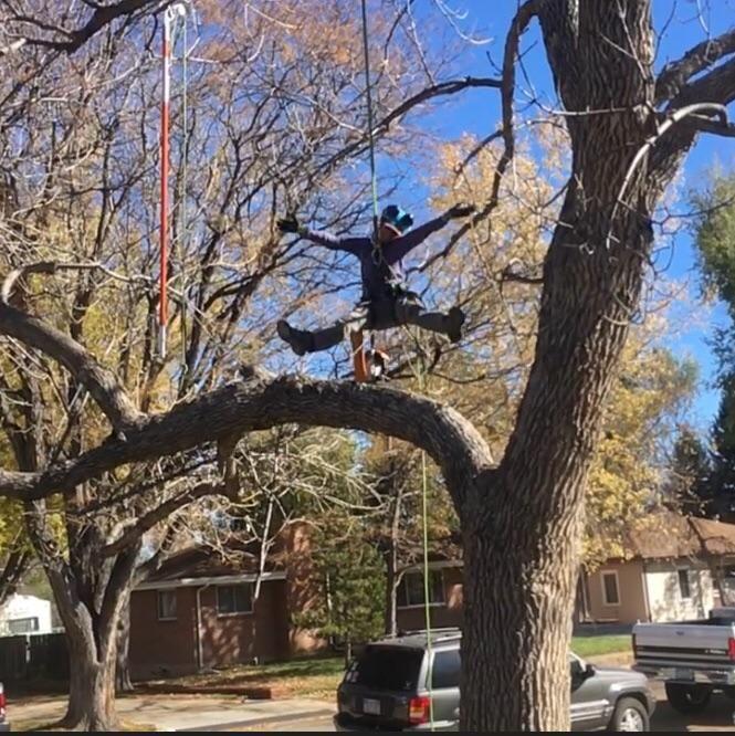 Blue Treeper Arbor Care