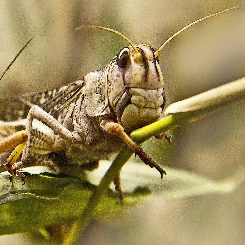 Grasshoppers Lawn Service, LLC