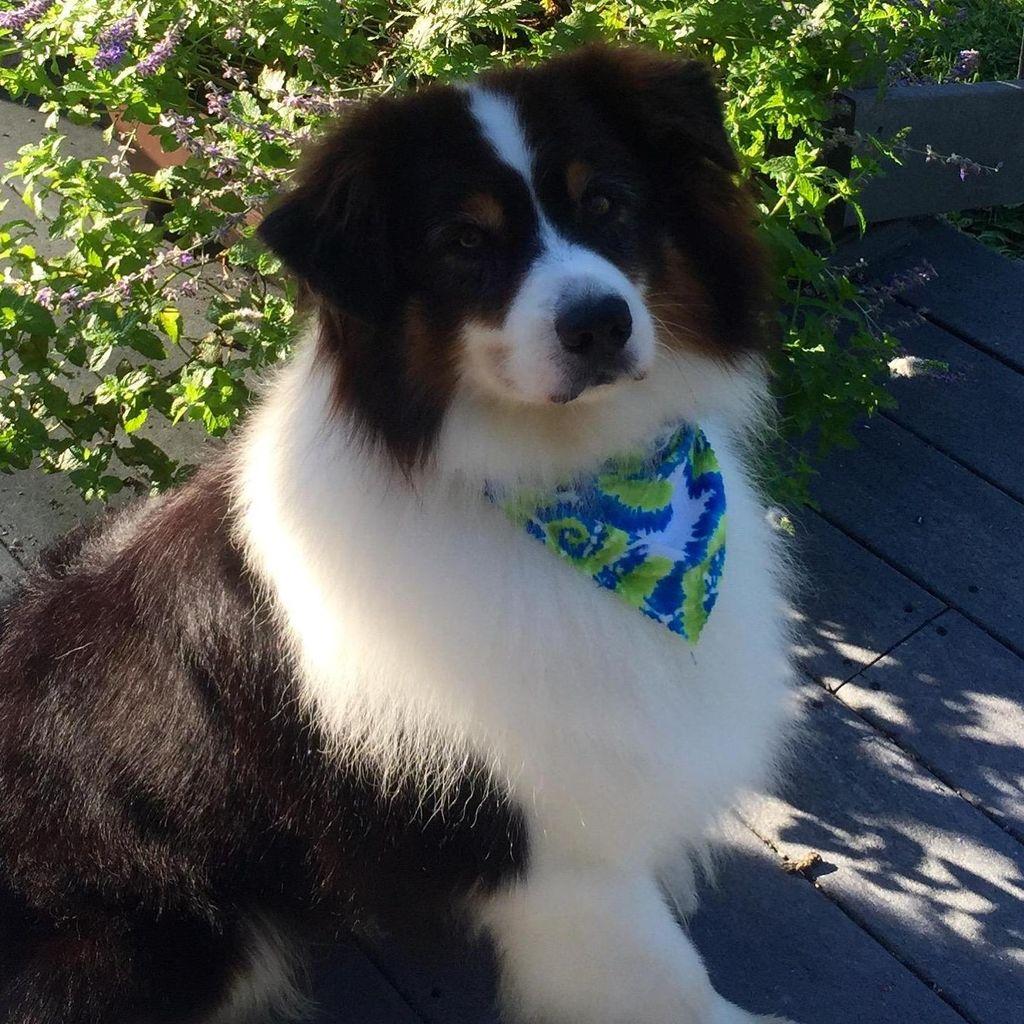 The Blue Butterfly Dog Training LLC