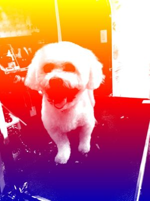 Avatar for Lots O' Paws Dog Grooming Front Royal, VA Thumbtack