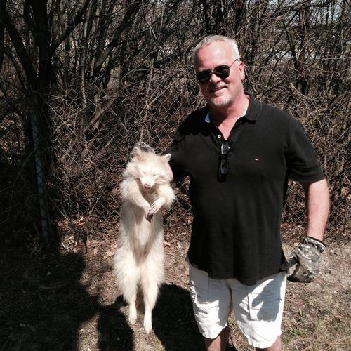 Albino Raccoon unfortunately not taken alive