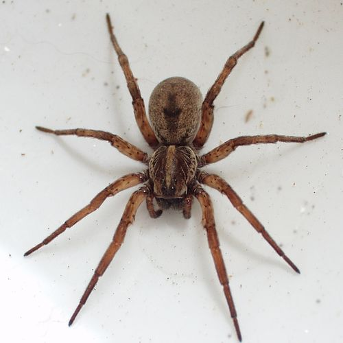 No one likes spiders, but as we all know, Oklahoma is full of them! From the eaves to the grass, from the baseboards to the attic- they are a constant threat. With our 8 barriers of defense, spiders do not stand a chance!