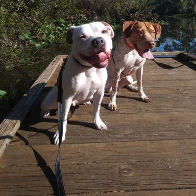 Avatar for Dogs -N- Paws Dog Walking and Pet Sitting Port Saint Lucie, FL Thumbtack