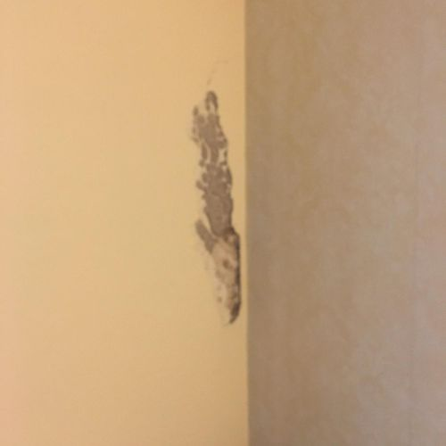 Termites making channels/ tunnels between paint and Sheetrock.