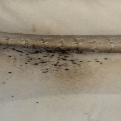 Mattress with bed bug markings on it.