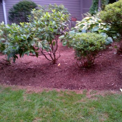 Avatar for wicked clean landscape corp Revere, MA Thumbtack