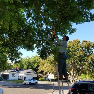 Avatar for Espino's Landscaping Stockton, CA Thumbtack