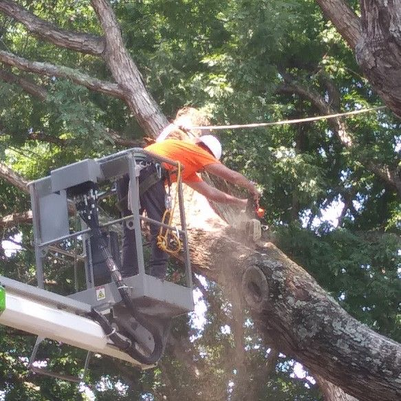 Rabbitt's Tree and Property Service