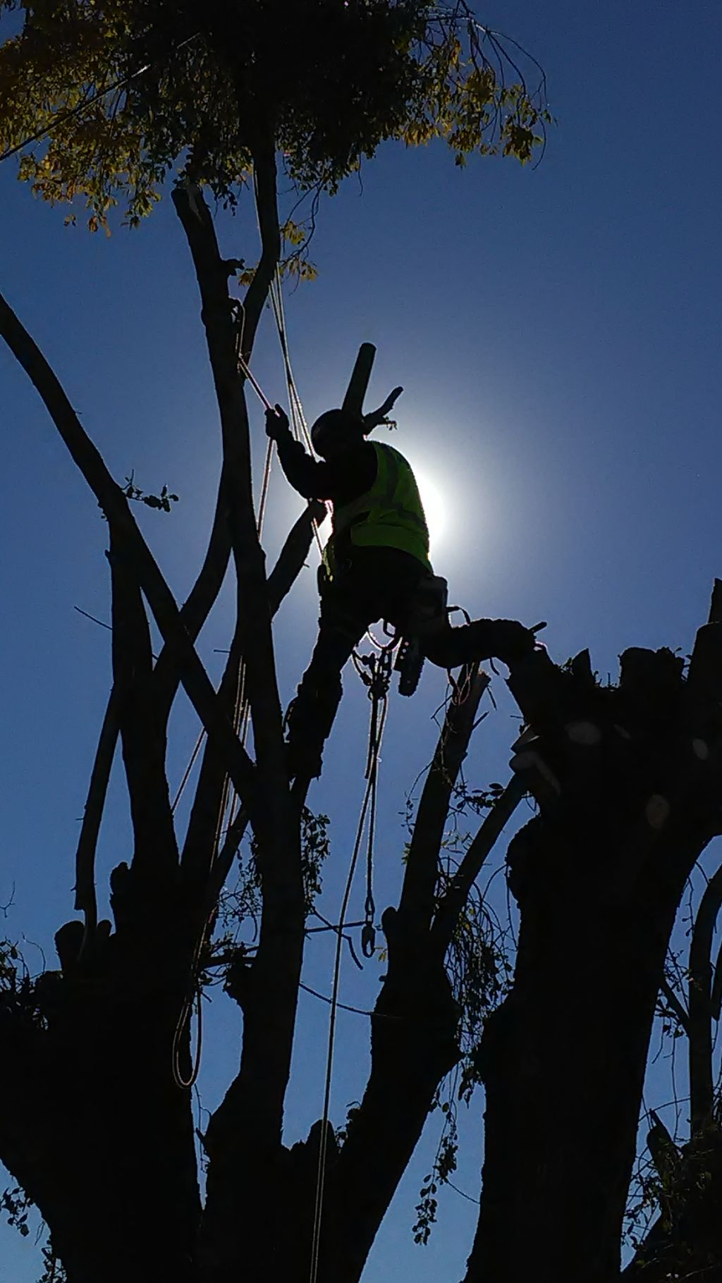 DLB TREE SERVICE