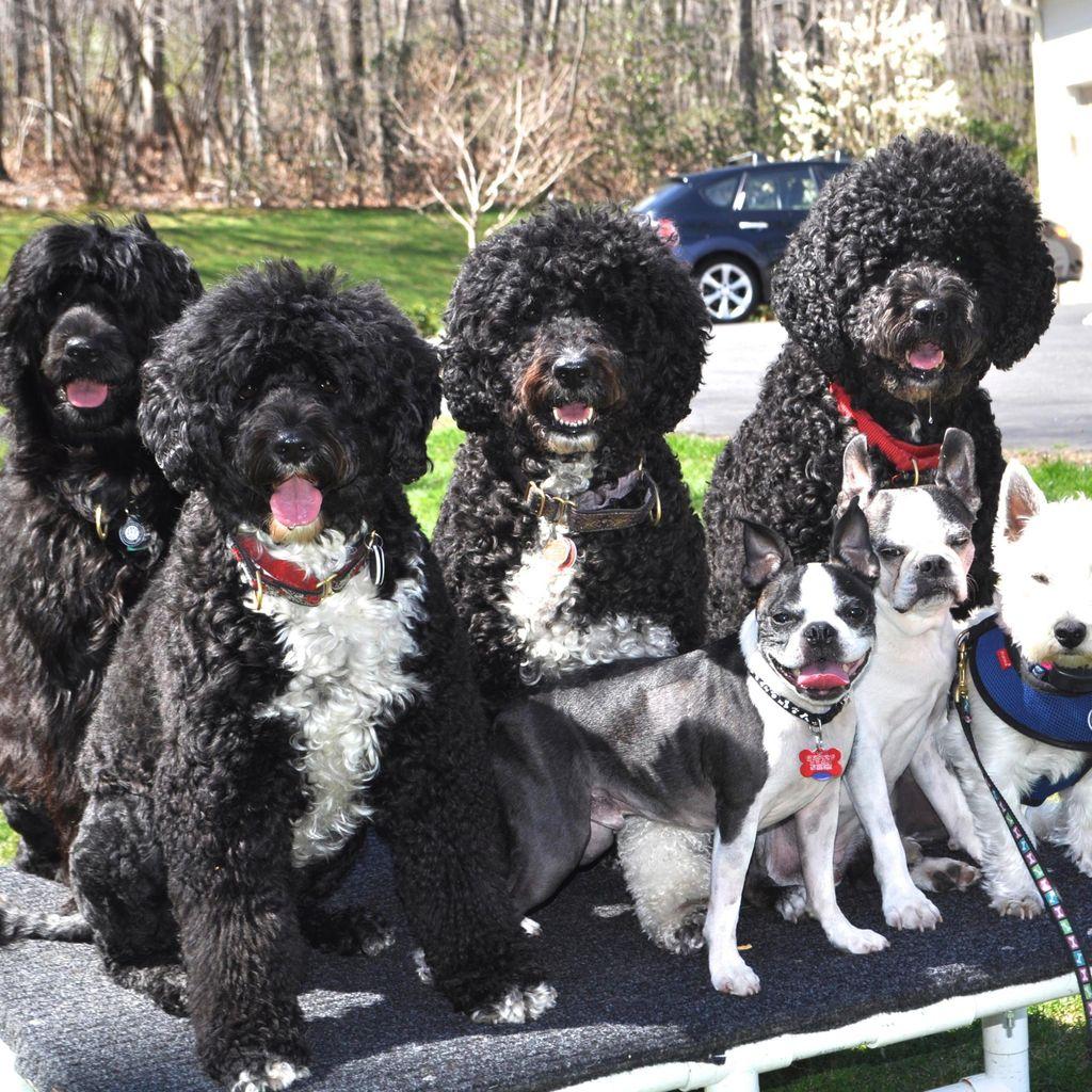 Sage Dog Trainers