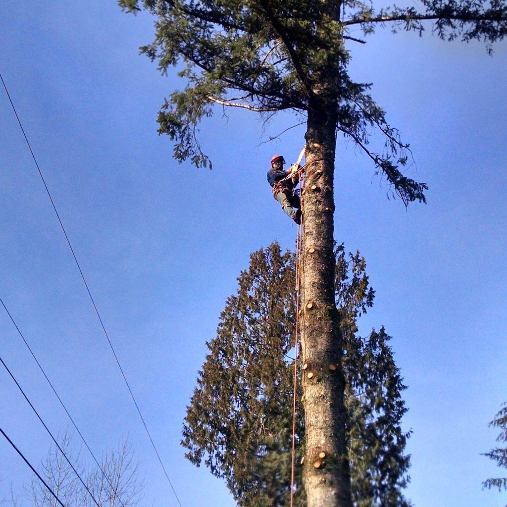 Ayuso Tree Service