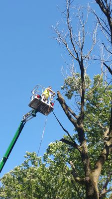 Avatar for Twin Cities Tree Care Professionals Saint Paul Park, MN Thumbtack