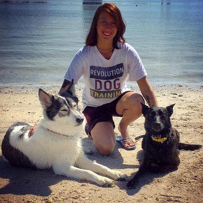 Avatar for Revolution Dog Training Tampa, FL Thumbtack