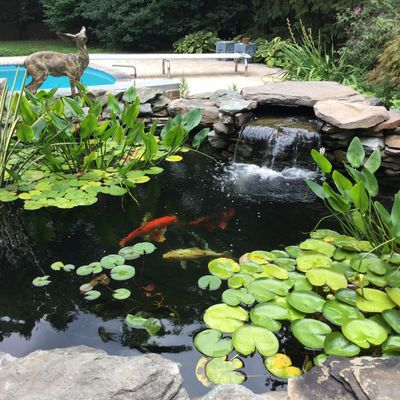 Avatar for Backyard Ponds, LLC