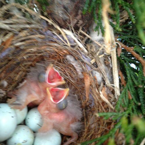 Baby birds rescued