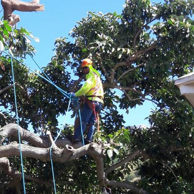 Avatar for Williamson Tree Services