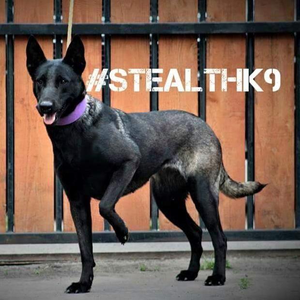 Stealth k9