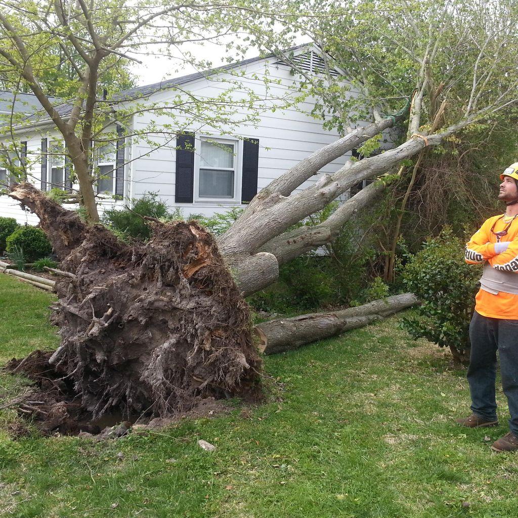 Stumpbusters Tree Service LLC.