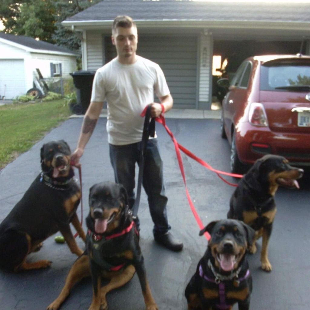All Obedience Dog Training Jackson Mi