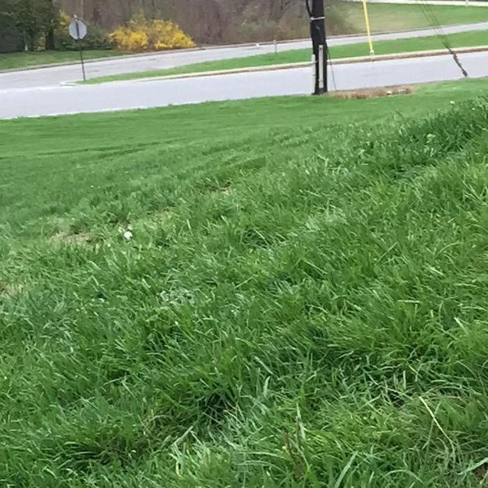 Great Care Lawn Service