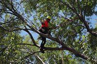 Avatar for Matt Latham, Certified Arborist