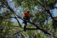 Matt Latham, Certified Arborist