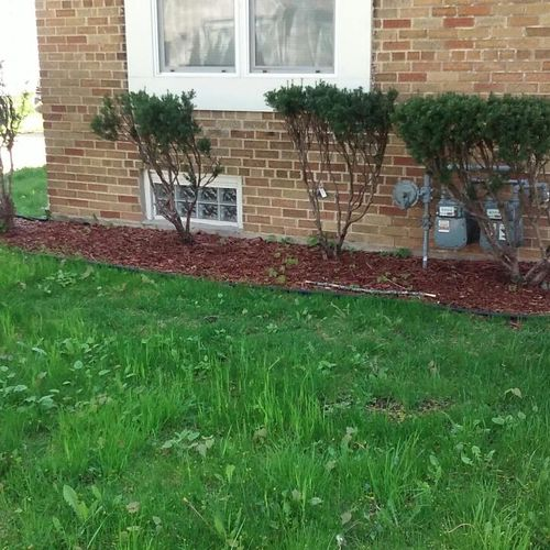 Front Lawn hedge and Mulch (Before)