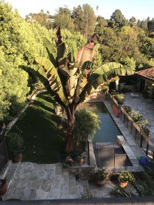 Avatar for V.Guillen's Landscape & Garden services Los Angeles, CA Thumbtack
