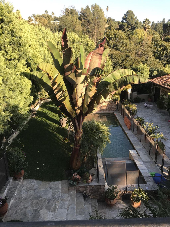 V.Guillen's Landscape & Garden services