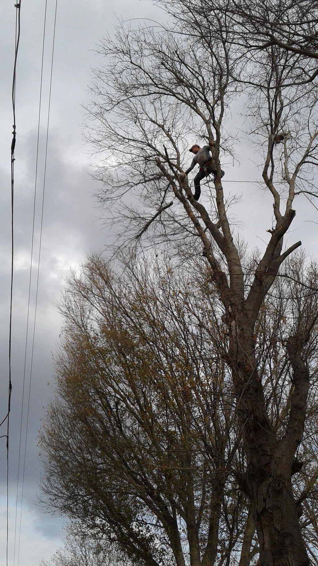 Patino Tree Service