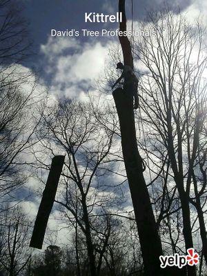 Avatar for David's Tree Professionals