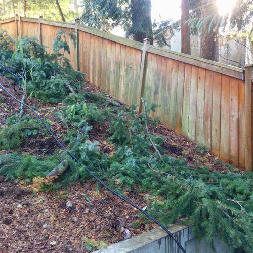 before pressure wash wood fence