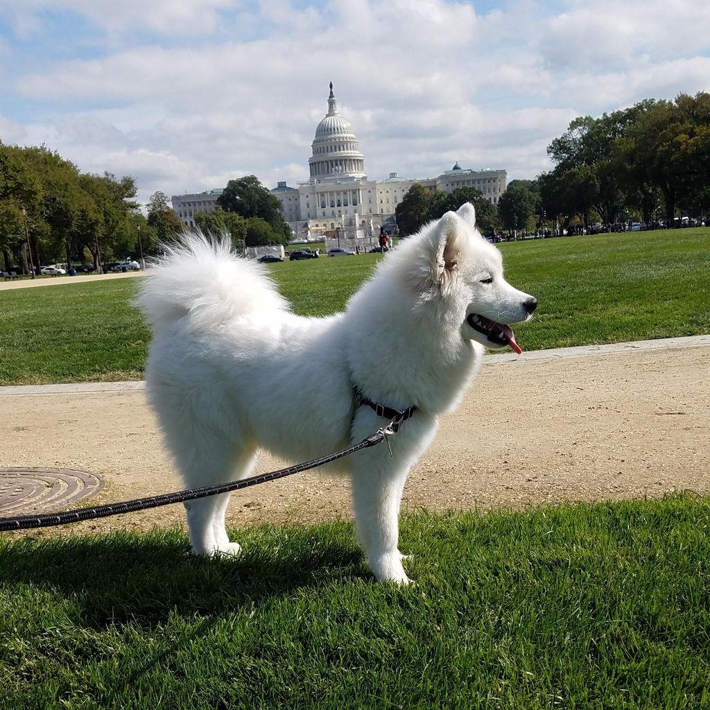 NoMa Pet Walking & Care