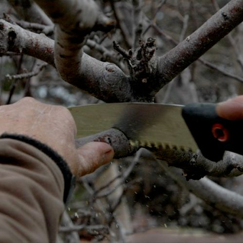 My expertise in proper pruning techniques can enhance the long-term health and value of your trees.