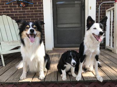 Avatar for Daniel's Dog Training Oklahoma City, OK Thumbtack