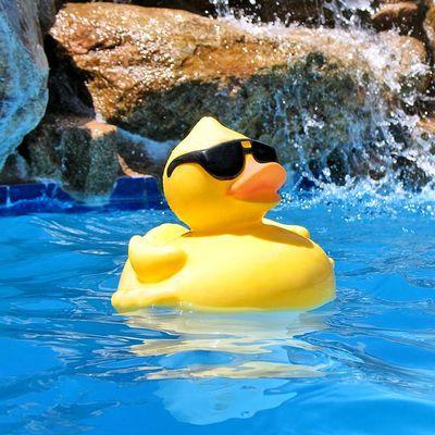 Avatar for Catalina Pool Repair