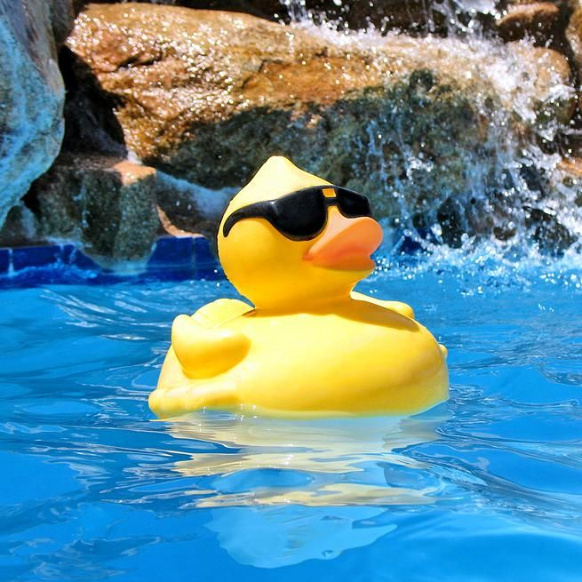 Catalina Pool Repair