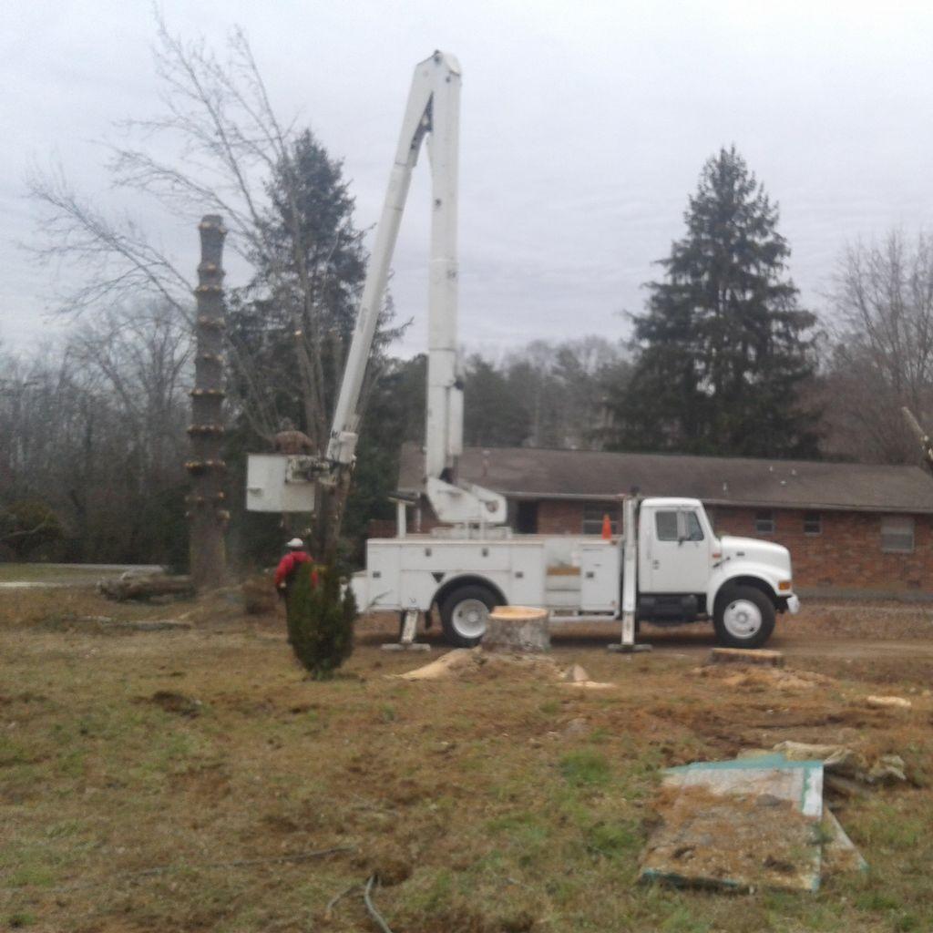 L&m tree service